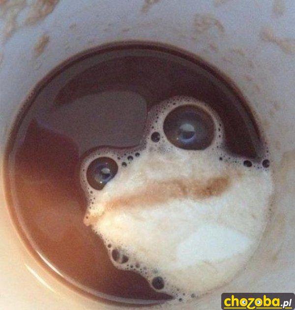 Żaba w kawie