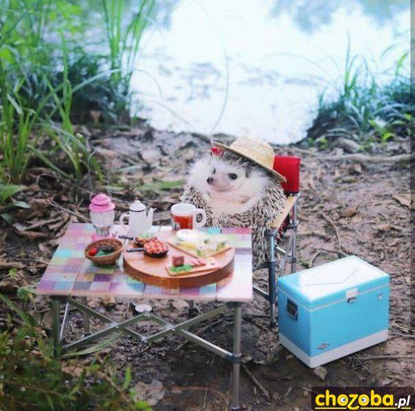 Jeżyk na pikniku