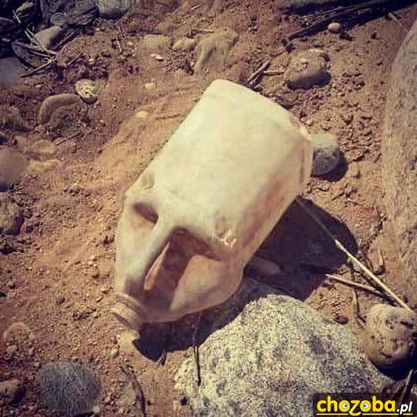 W Egipcie odnaleziono tajemniczą twarz