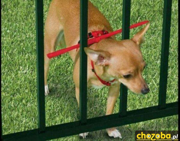 zeby-pies-nie-uciekl