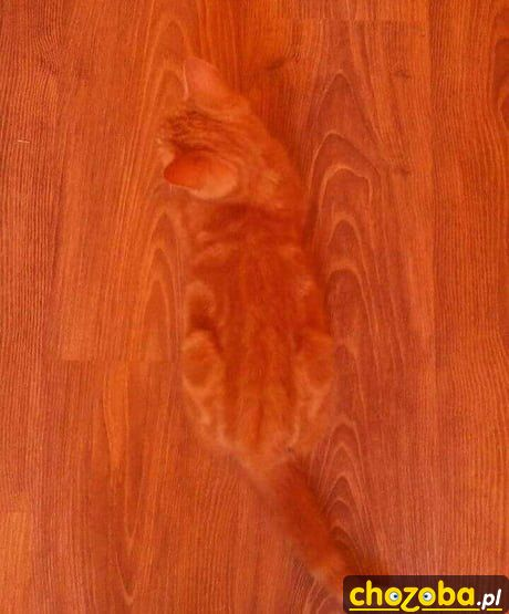 Niewidzialny kot