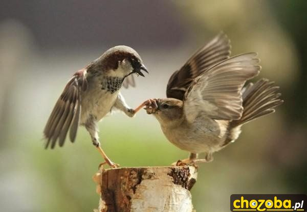 Zamknij dziób!