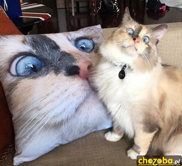 Moja poduszka