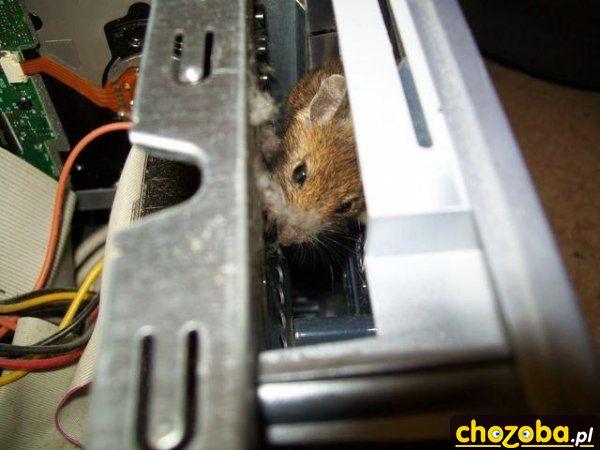 Prawdziwa mysz komputerowa