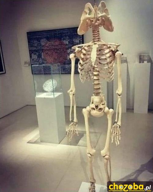 Współczesny szkielet