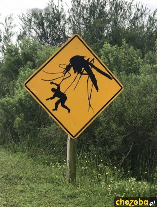 Uwaga komary!