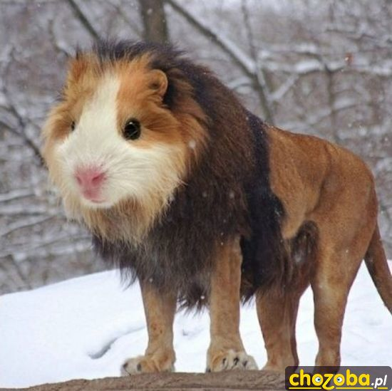 Groźny lew