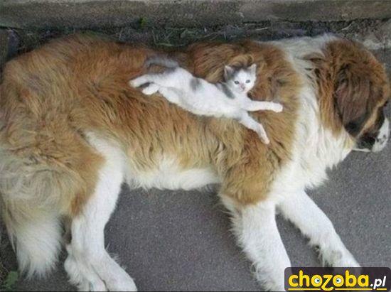 Łóżko dla kota
