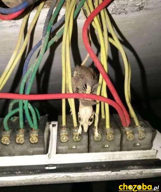 Mysz miała pecha