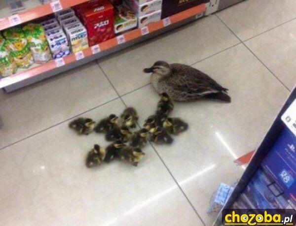 Z dziećmi na zakupach