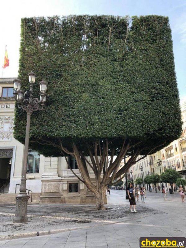 Drzewo z Minecrafta