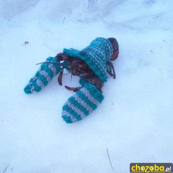 Gdy jest naprawdę zimno