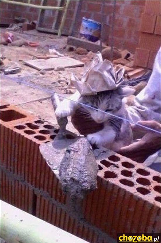 Kot budowniczy