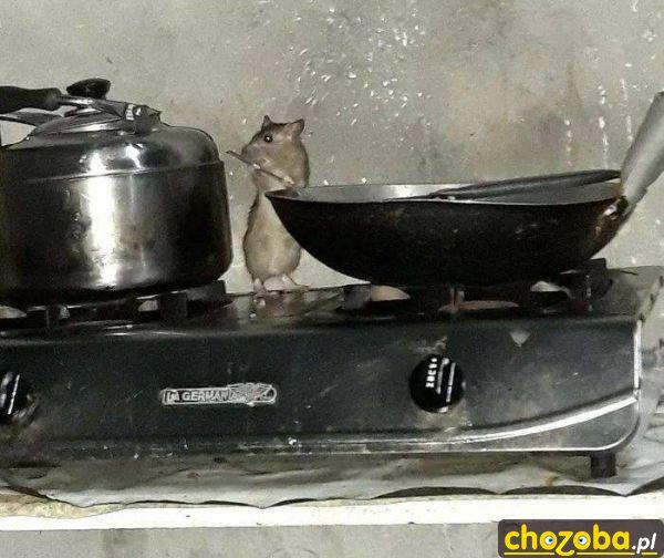 Mała kucharka