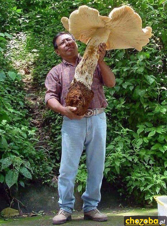 Mega grzyb