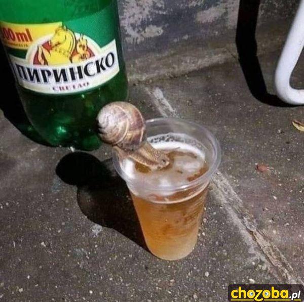 Ślimak na piwie