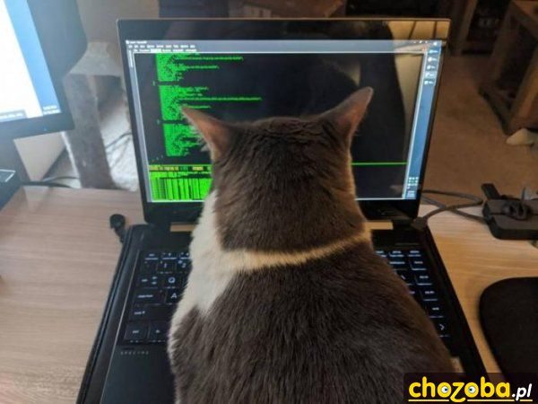 kot-haker