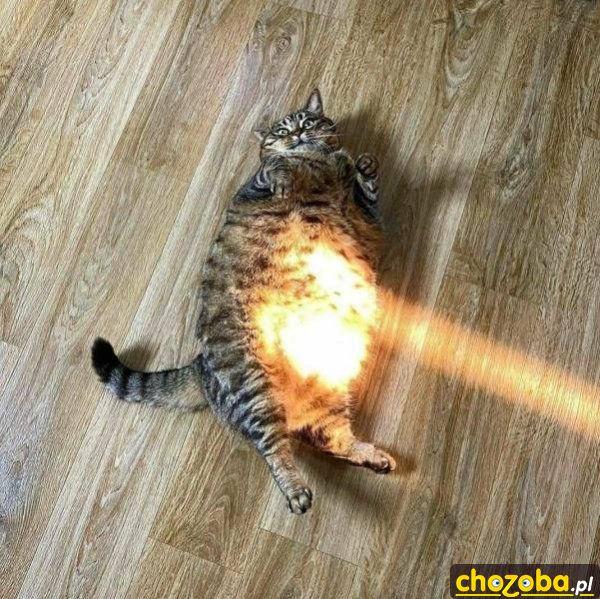oswiecony-kot