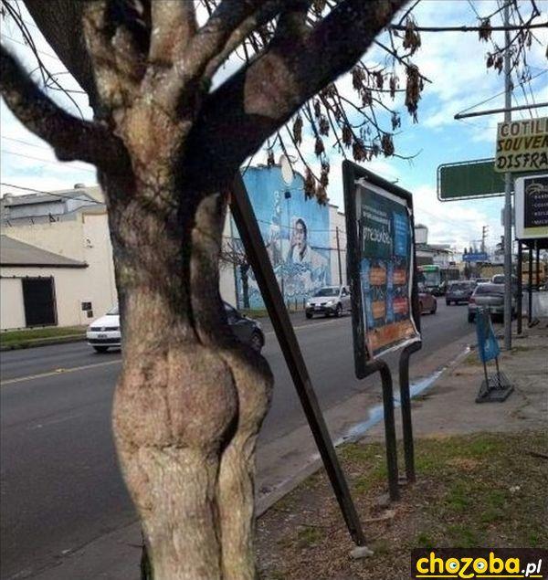 Drzewo z tyłkiem