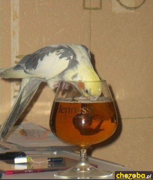 papuga-na-imprezie