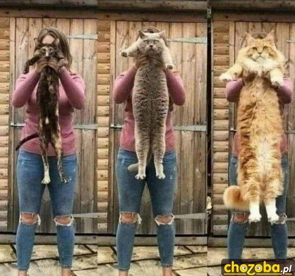 Kot w 3 rozmiarach