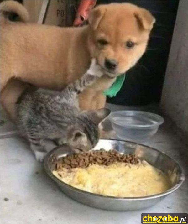 Zostaw to moje!