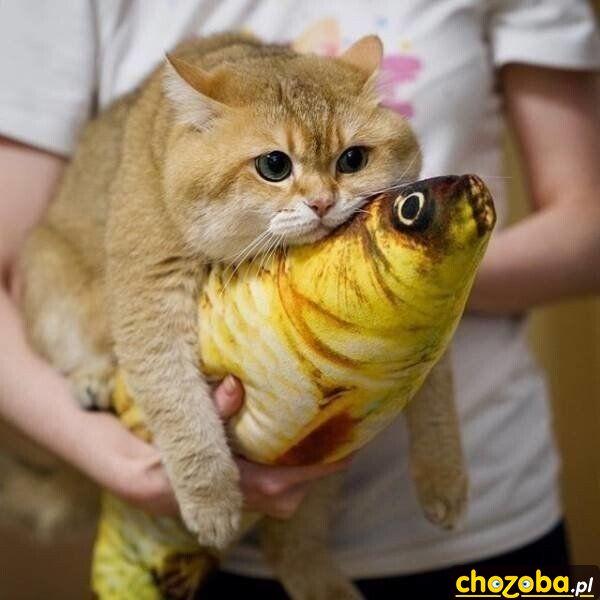 Moja rybka