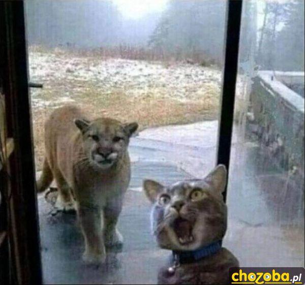 Wpuśćcie mnie!