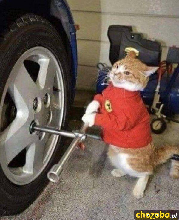 Kot zmienia koło