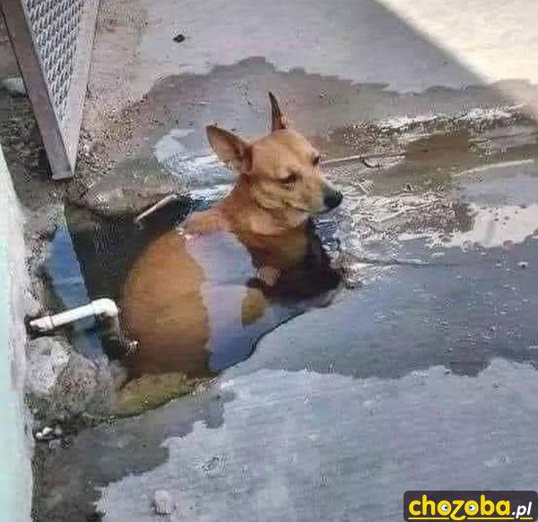 Psie jacuzzi