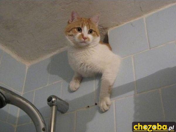 Kot wpadł z wizytą