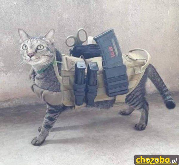 Uzbrojony kot