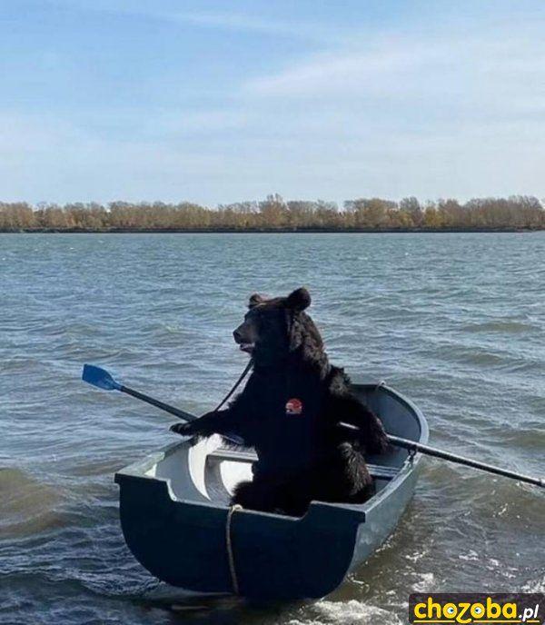 Niedźwiedź wyrusza na łowy