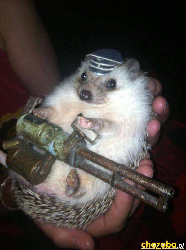 Uzbrojony jeżyk